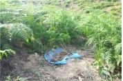 군위군산림조합, 고사리재배로 농가소득 향상 기대